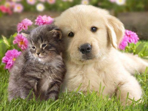 .Puppies, Best Friends, Bestfriends, Dogs Cat, Pets, Kittens, Furries Friends, Golden Retriever, Animal