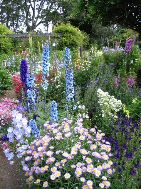 "Cottage Garden...would love to have a little of this in my yard. Always loved ""English-type"" garden...looks like nature at it's best"