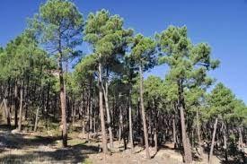 Bosque mediterráneo en un rango Albarracin Foto de archivo - 11320670. Bosque mediterráneo en un rango Albarracin