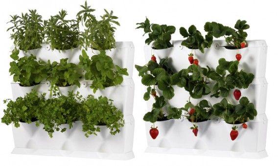 Modulair systeem voor verticale tuin, mooi wit, klik op de link naar Minigarden - in plaats van of voor onze houten schutting?
