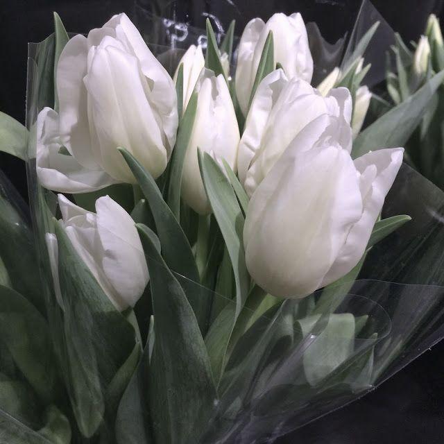 """January 17, 2016 (017/366) « L'hiver est sur ma tête mais il règne dans mon coeur un éternel printemps. » - Victor Hugo [""""Winter is in my head, but eternal spring is in my heart.""""] C'est ma vie!: Un éternel printemps"""