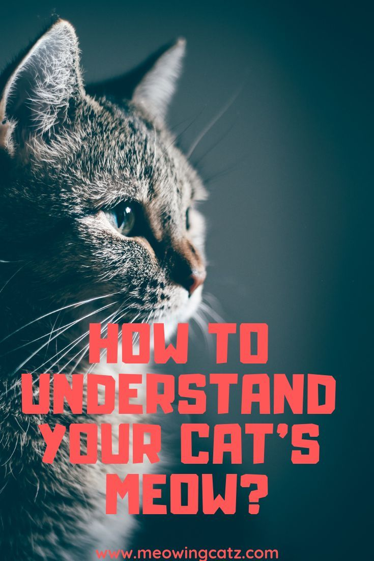 How To Understand Your Cat S Meow Cat Meowing At Night Cat Meow Meaning Cat Behavior