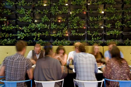 The 'south-side' plant wall at The Common Man #swpromenade #melbourne #bar