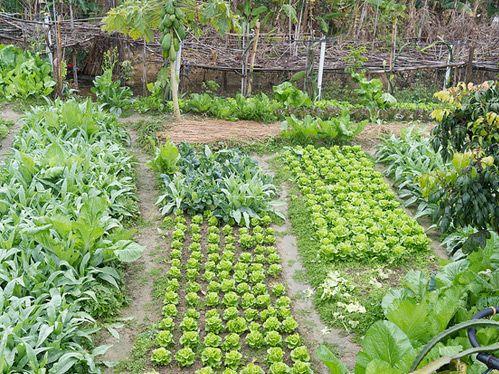 Orto ... la rotazione delle colture