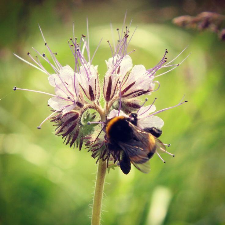 Bijen snoepen van de bijenvoer