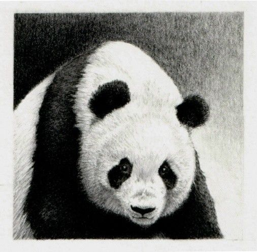 Panda pencil drawing  'Out of the Dark' by GillianMcMurray on Etsy, $50.00