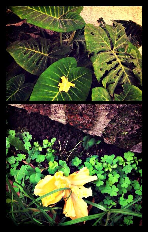 Ley de Contraste: La posición de la flor en las diferentes tomas, incide sobre la apariencia, ya sea de menor o mayor tamaño.