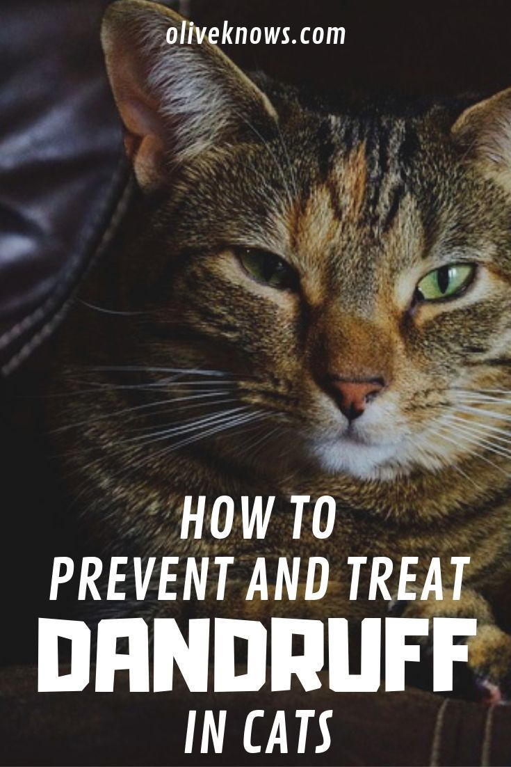 How To Prevent And Treat Your Cat S Dry Skin And Dandruff Oliveknows Cat Skin Cat Training Cat Dandruff
