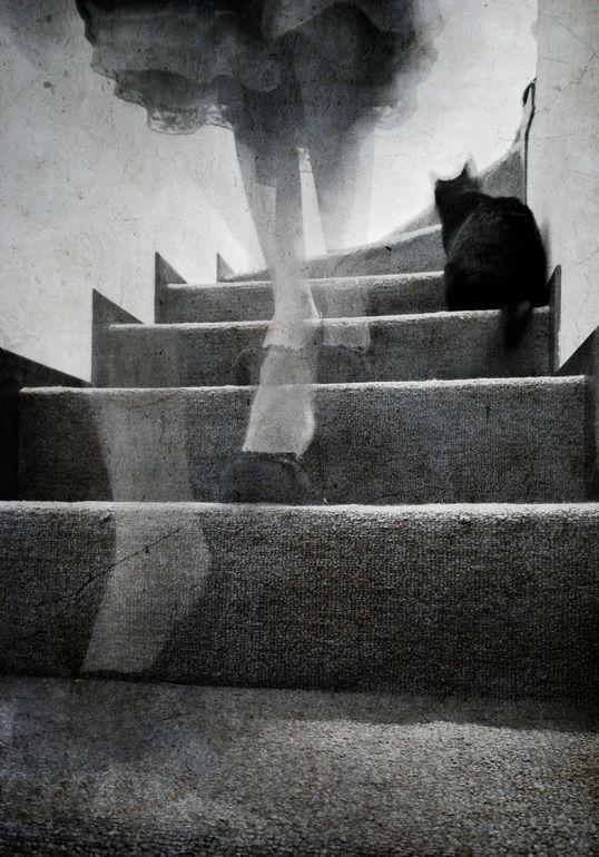 "Saatchi Online Artist: Laura Melis; Black & White, Photography ""Stairs"""