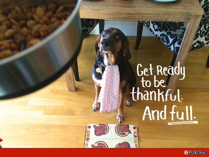 Thanksgiving is about being together. Make sure you set a place for your dog at the table!