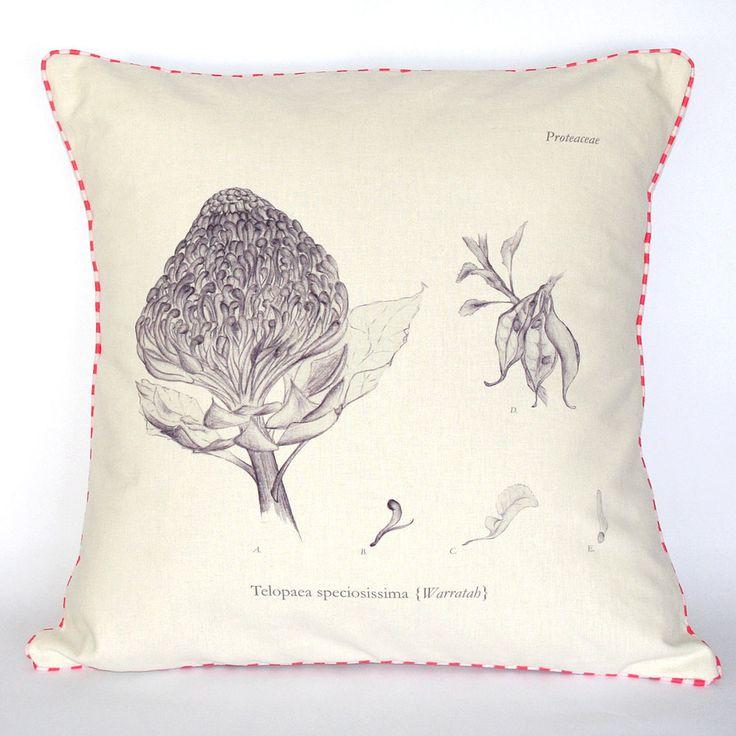 Beautifully illustrated Waratah Botanical Cushion. Spring/Summer collection 2014