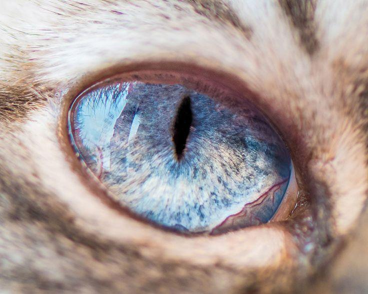 Perdez-vous dans la profondeur du regard des chats !