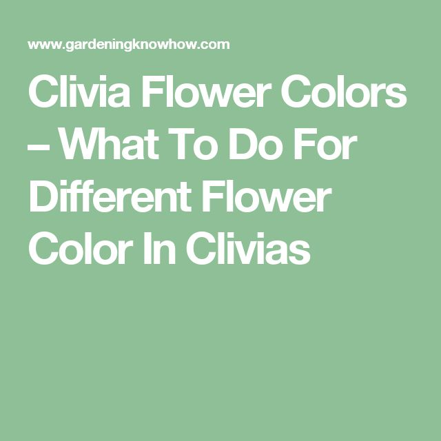 Clivia Flower Colors – What To Do For Different Flower Color In Clivias