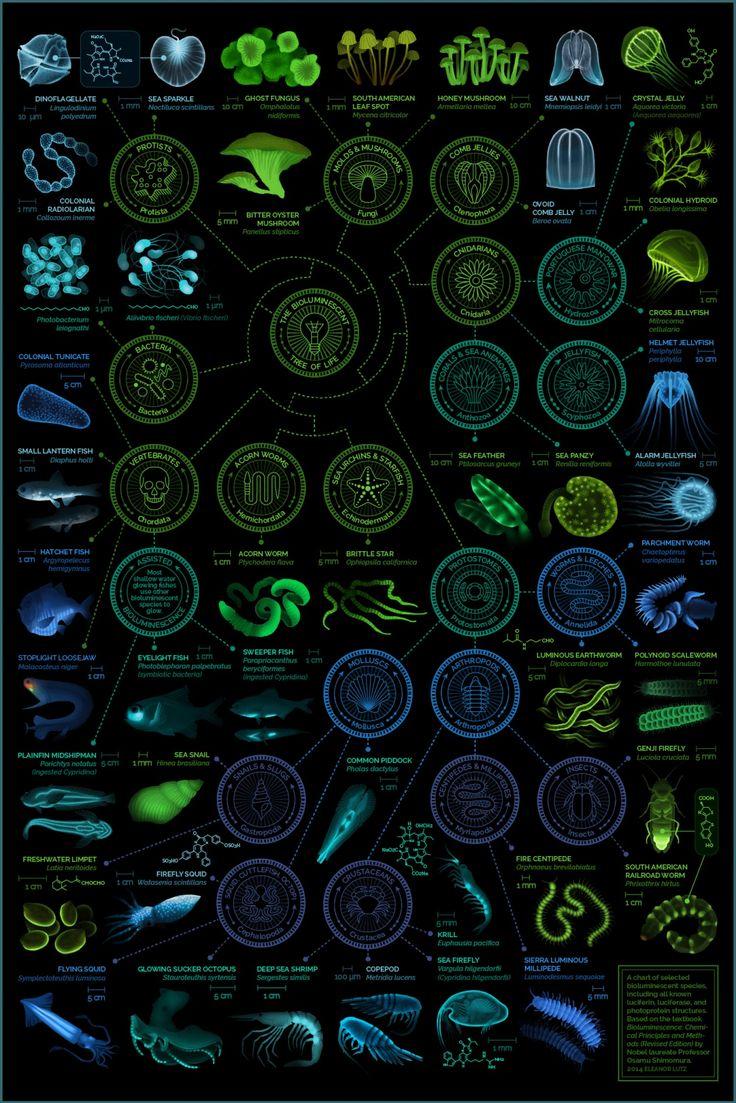 A visual compendium of bioluminescent creatures
