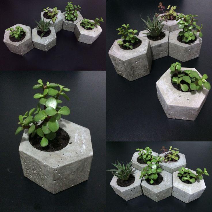 Vaso hexagonais em cimento. Lixados e envernizados, são ideais para suculentas e…