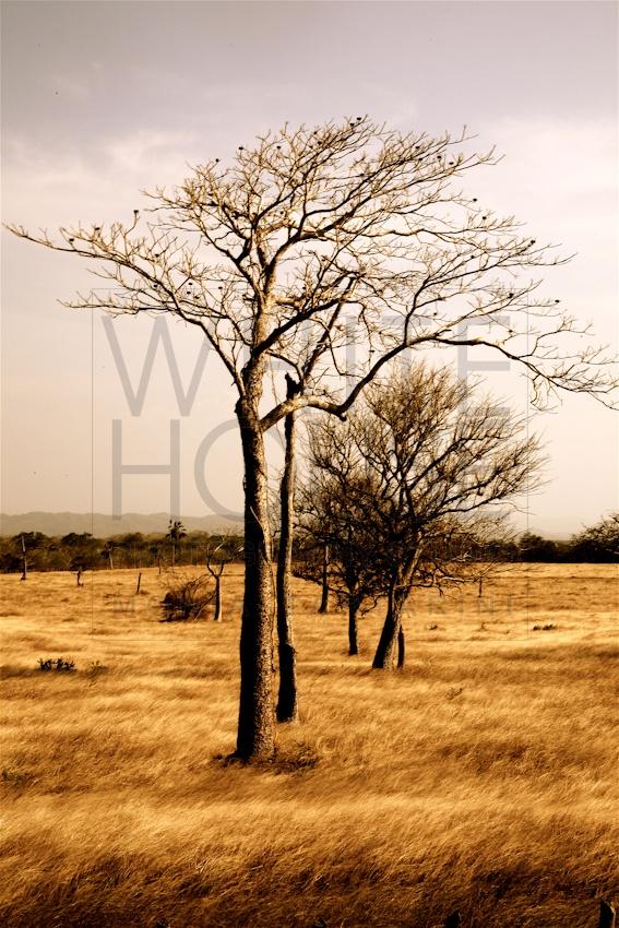 www.monia.it COLOMBIA