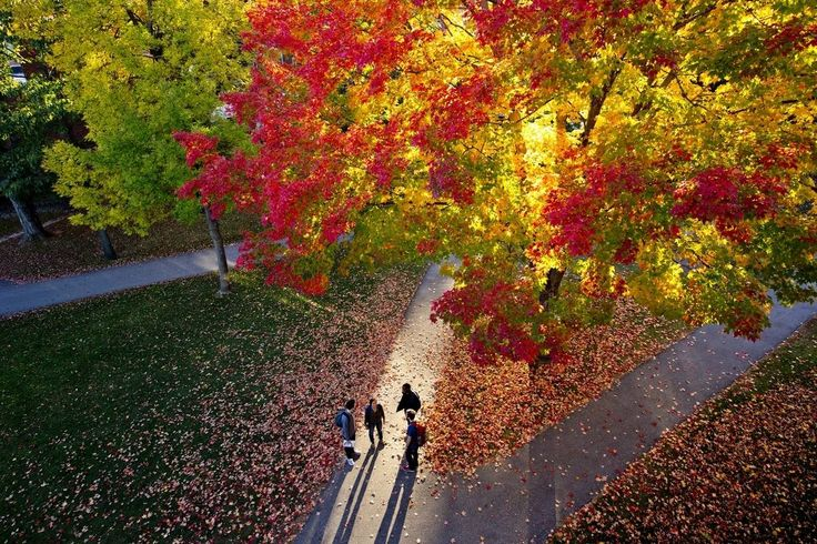How Bates College Powers Visual Communications Across Platforms. The Bates campus lights up with the brilliance of fall foliage on a late afternoon on the Historic Quad. Annie Kandel '18 of Amherst, Mass., Matthew Winter '18 of New York City, and Durotimi Akinkugbe '18 of London, U.K. They were joined by a fourth student,