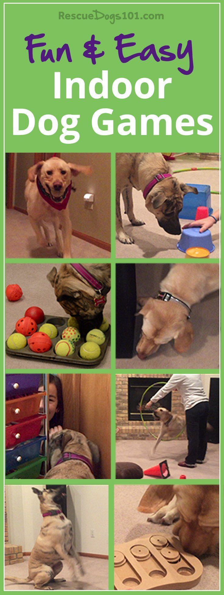 11 Fun and Easy Indoor Dog Games – Physical and mental exercise is so important for your dog's health, so when it's not possible to go outside, then turn to this list of indoor dog games. #doggames  via @KaufmannsPuppy