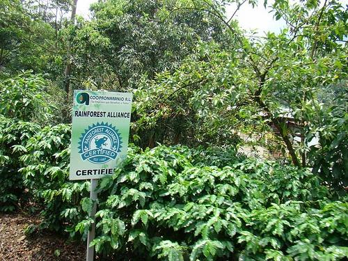 Výsledek obrázku pro rainforest brazil plantations coffee