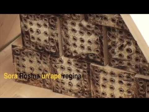 Sora Rosina, un'ape regina - YouTube