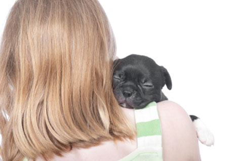 worming their way in, part two: petplan pet insurance looks at parasites people can get from pets: Pet Insurance, Petplan Pet