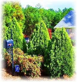 Low Maintenance Shrubs for the South - Wilson Bros. Nursery
