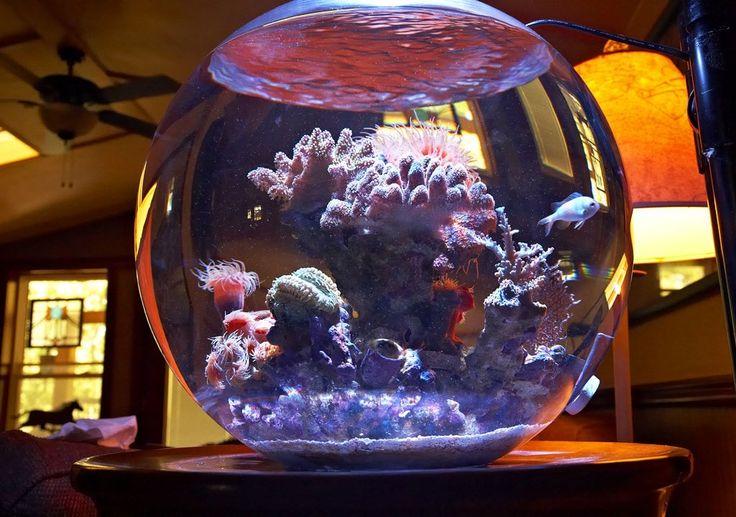 Круглый аквариум в интерьере квартиры