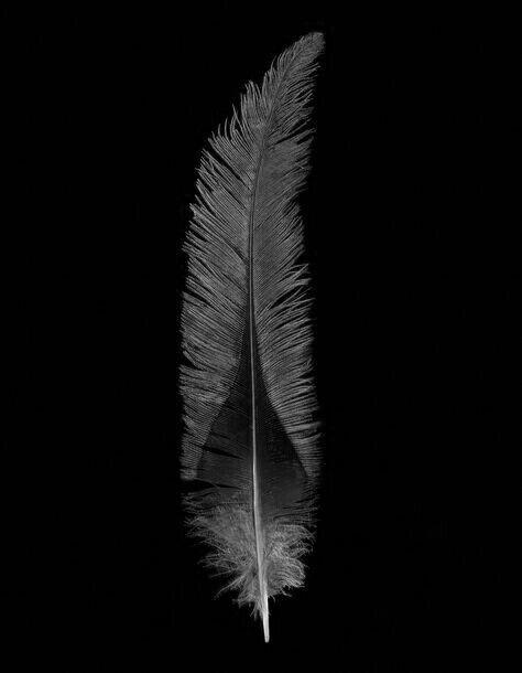 Pin By Xinz Wang On Alpha Pinterest Feather Bird