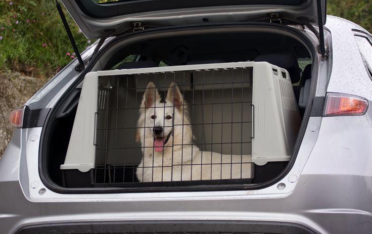 Abituare il cane al kennel e alla museruola