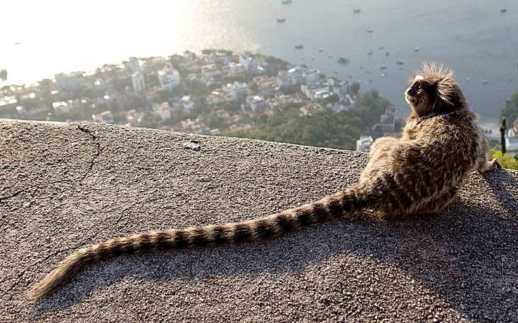 How can you have a fight against a monkey in Rio de Janeiro? Well, while traveling in Brazil everything seems possible.