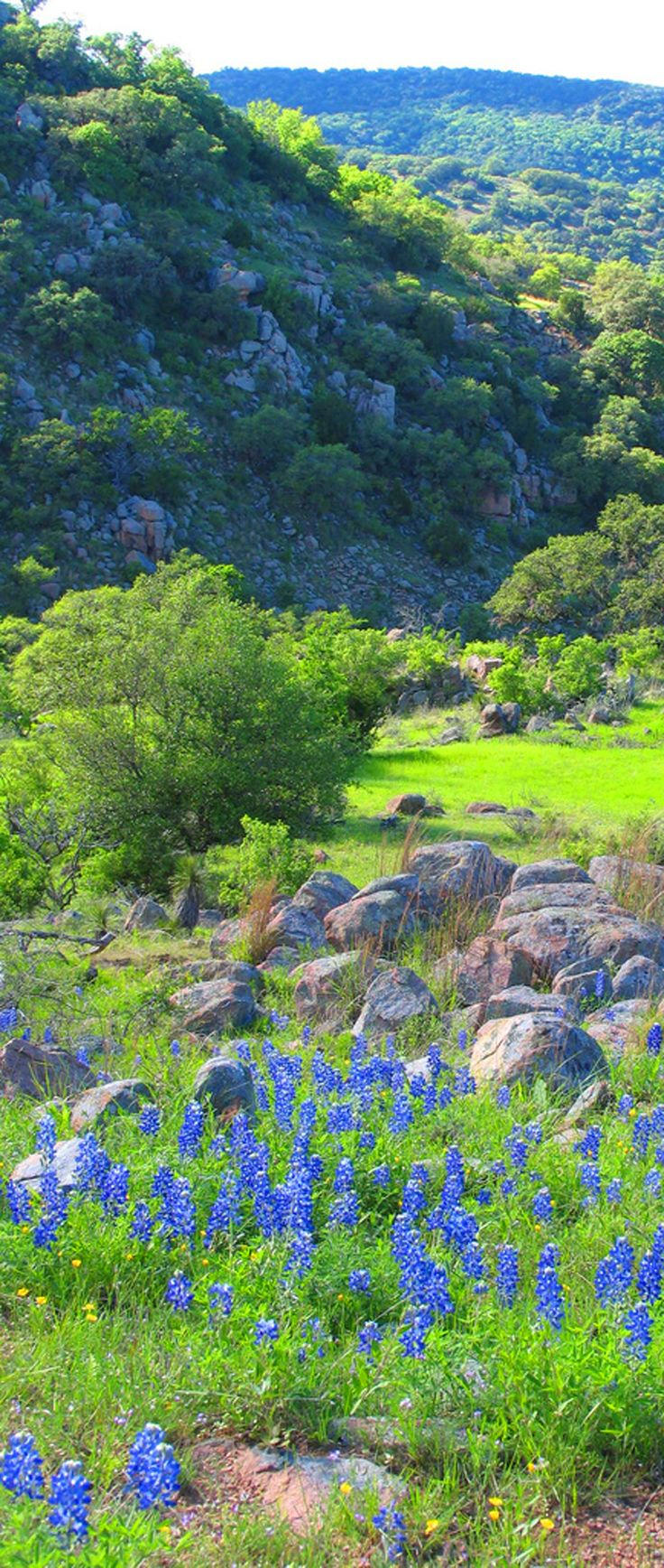 Texas Hill Country - love the bluebonnets....