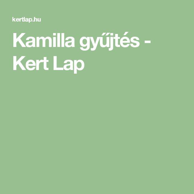 Kamilla gyűjtés - Kert Lap