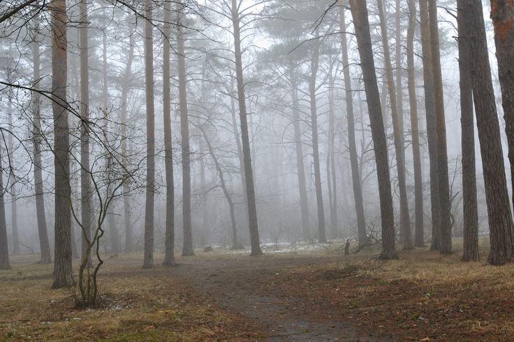 https://flic.kr/p/UTG99q | Spring fog in the forest,