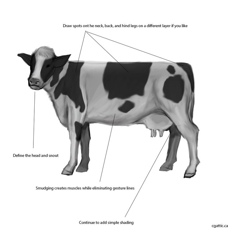 Easy Cow Muscle Diagram - Electrical Work Wiring Diagram •