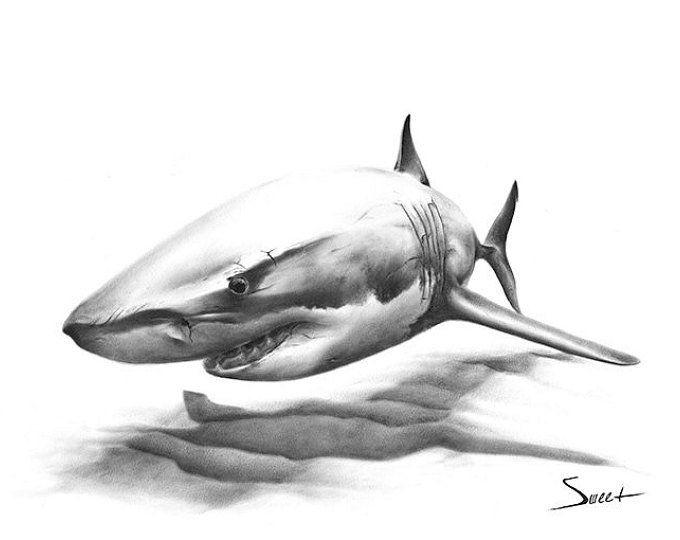 Картинки акула эскиз