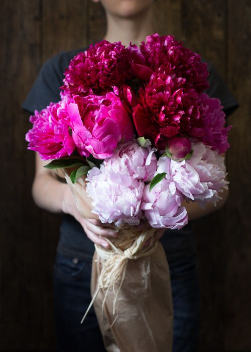 Berry coloured peonies flowers