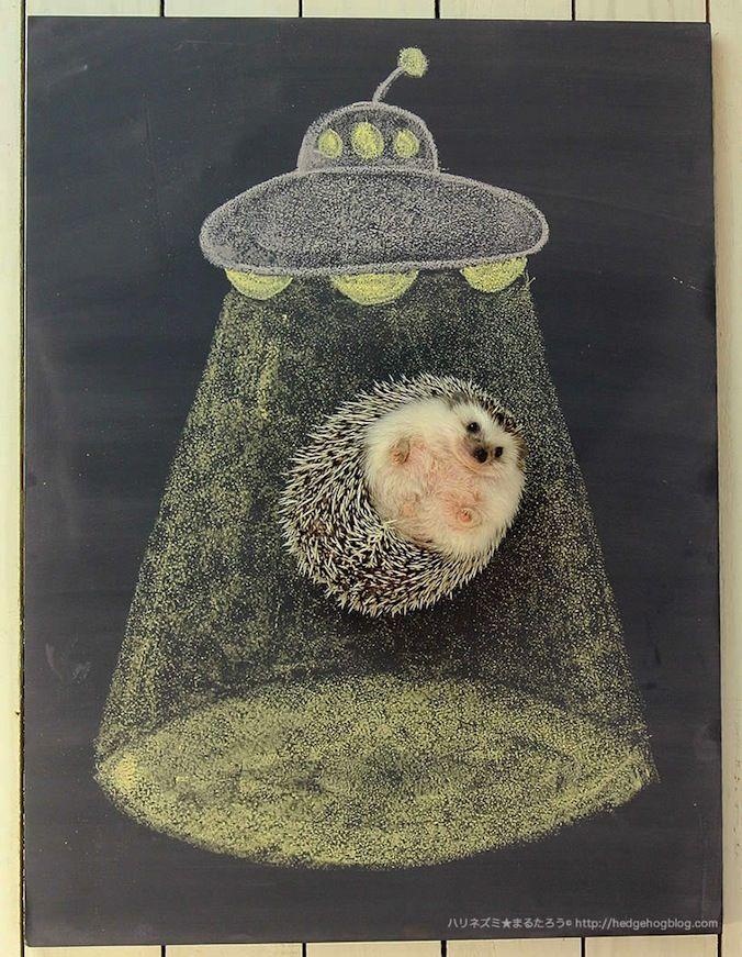 UFOにさらわれるハリネズミ