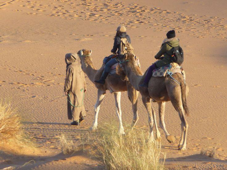 Kameeltocht door het prachtige #Marokko. Slapen onder 1.001 nacht sterrenhemel. Wat een prachtige #huwelijksreis. http://www.pluq.nl/nl/huwelijksreizen/marokko