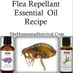 Dog: Ear Mites & Flea Repellant Recipes » The Homestead Survival