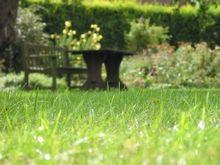 Supprimer la mousse sur sa pelouse