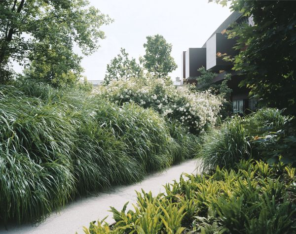 Quai Branly garden by Gilles Clément