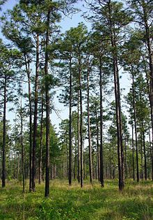 Nokuse Plantation - Wikipedia, the free encyclopedia