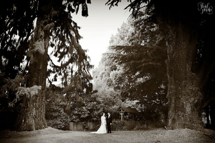Delightful wedding location for a summers day - Wanaka Station Park