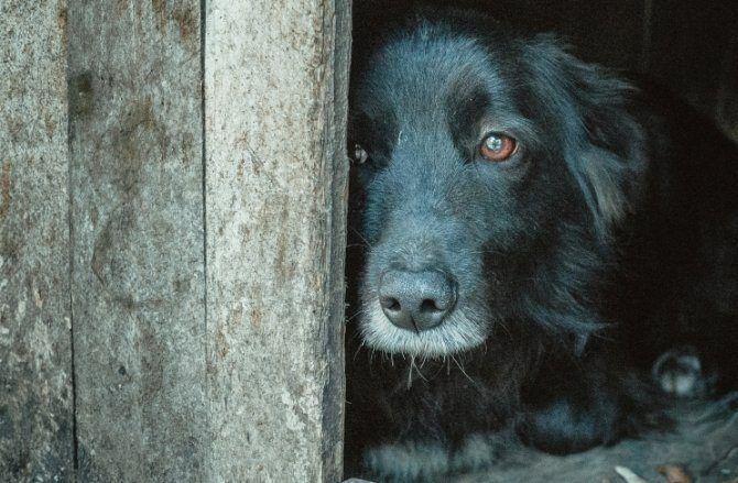 5 cosas que deprimen a los perros - Emedemujer VE