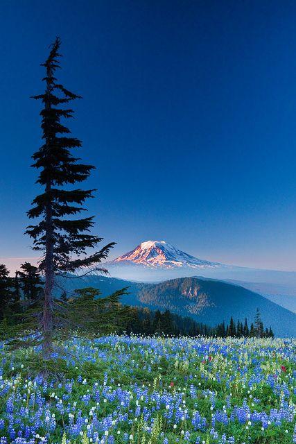 Monte Adams e prados com flores silvestres na região selvagem de Goat Rocks, estado de Washington, USA.