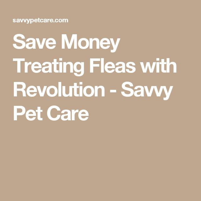 Save Money Treating Fleas with Revolution - Savvy Pet Care
