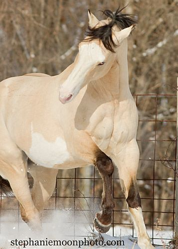 If this is not the most beautiful horse I've ever seen, I don't know which horse is!