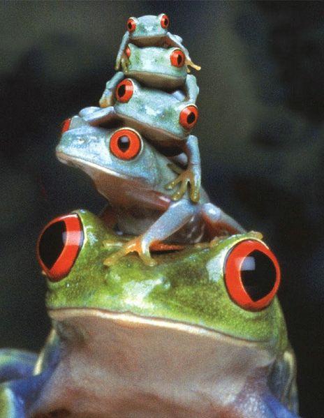 Froggy Pyramid