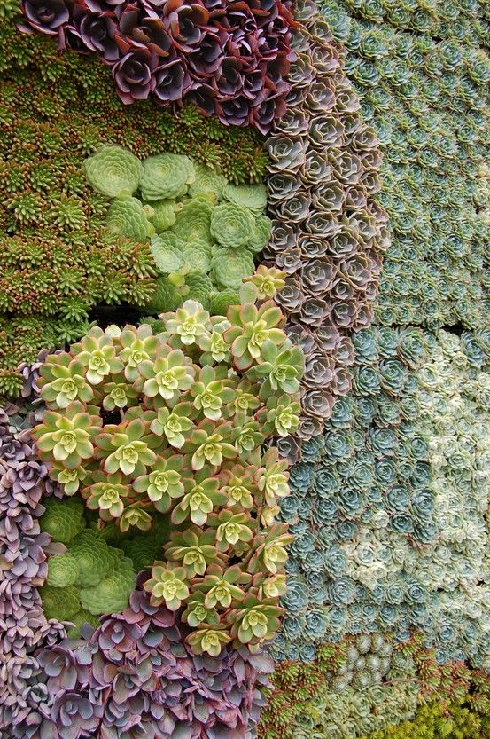 tightly woven succulents.