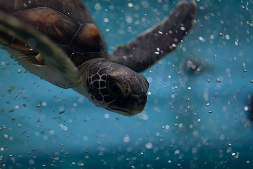 Turtle time!Animal Nature, Keep Swimming, The Ocean, Things, Reader Submissive, Beautiful Pictures, Sea Turtles, Awesome Stuff, Pictures Day